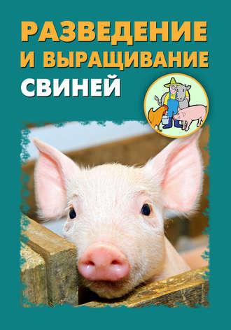 Илья Мельников, Александр Ханников, Разведение и выращивание свиней