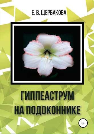 Елена Щербакова, Гиппеаструм на подоконнике