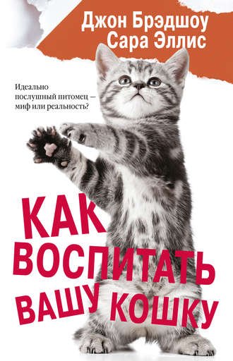 Как воспитать вашу кошку